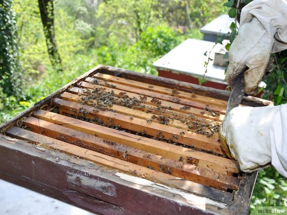 Immagine titolata Become a Beekeeper Step 8