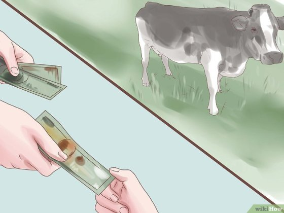 Immagine titolata Choose a Good Dairy Cow Breed Step 7