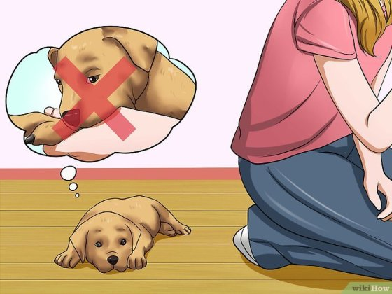 Immagine titolata Get Your Small Dog to Stop Biting and Barking at You Step 12