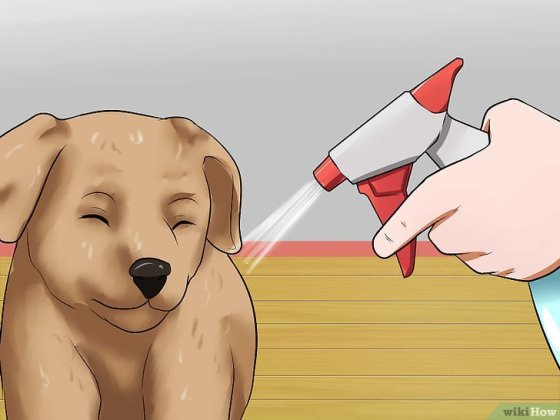 Immagine titolata Get Your Small Dog to Stop Biting and Barking at You Step 15