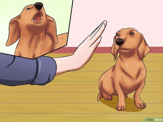 Immagine titolata Get Your Small Dog to Stop Biting and Barking at You Step 8
