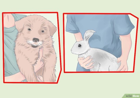 Immagine titolata Introduce a Dog and a Rabbit Step 8