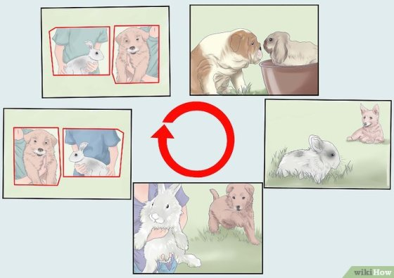Immagine titolata Introduce a Dog and a Rabbit Step 9