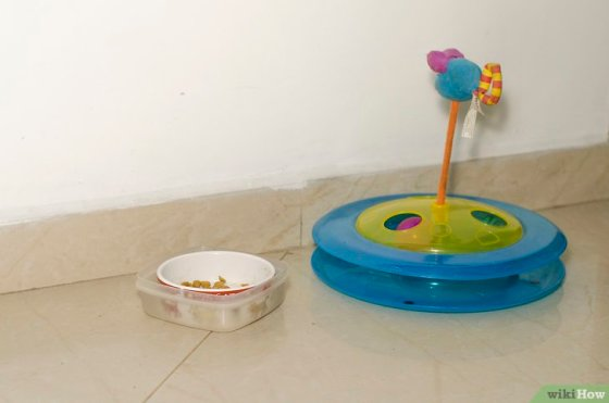 Immagine titolata Keep Ants Out of Pet Food Step 7