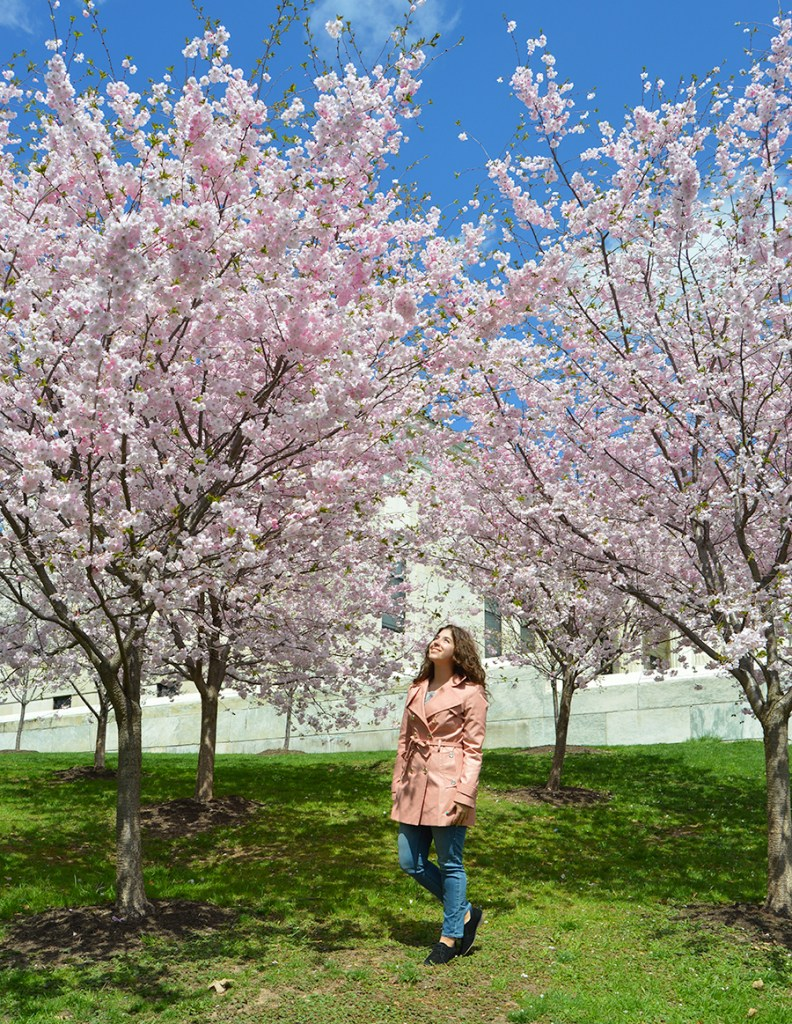 Cherry Blossoms in Buffalo, New York at Buffalo History Museum