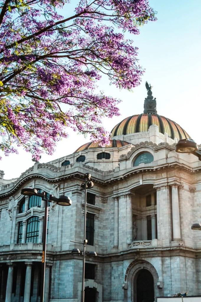 Palacio de Bellas Artes Jacaranda Tree