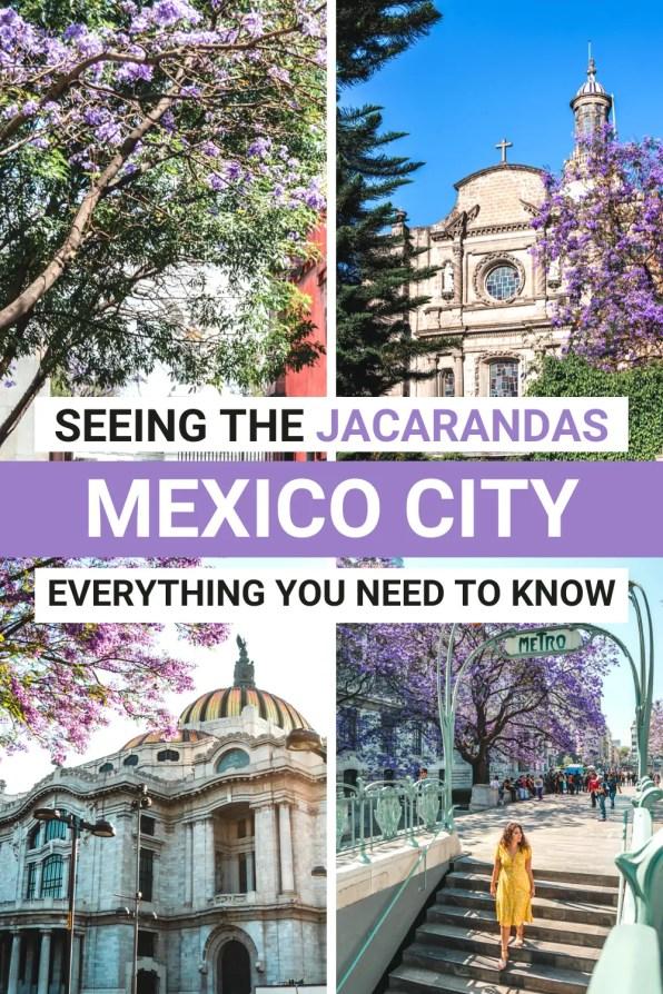 Jacarandas in MEXICO CITY (1)