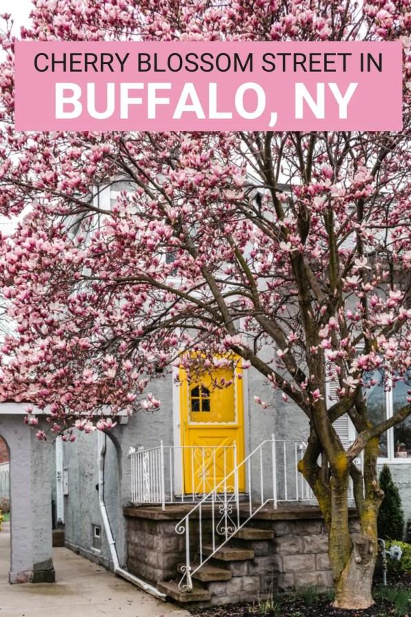 Street with Cherry Blossoms in Buffalo NY