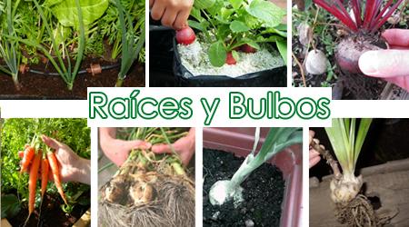 raices_y_bulbos_hidroponia
