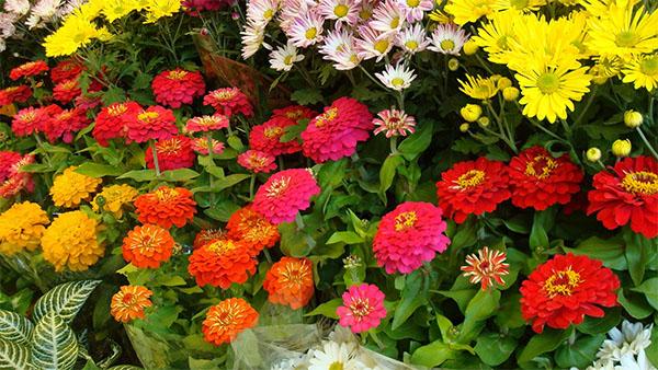 flores-xochimilco