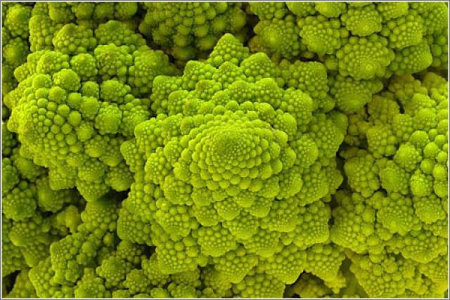 plantas-formas-geometricas (13)