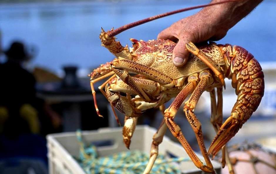 15 Restaurantes Especializados en Langosta de Menorca