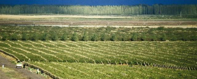 Bodega Del Desierto in La Pampa province.