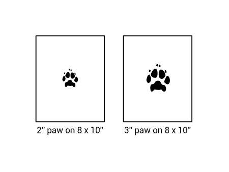 digital paw print sizing
