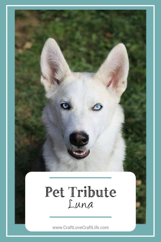 young dog loss