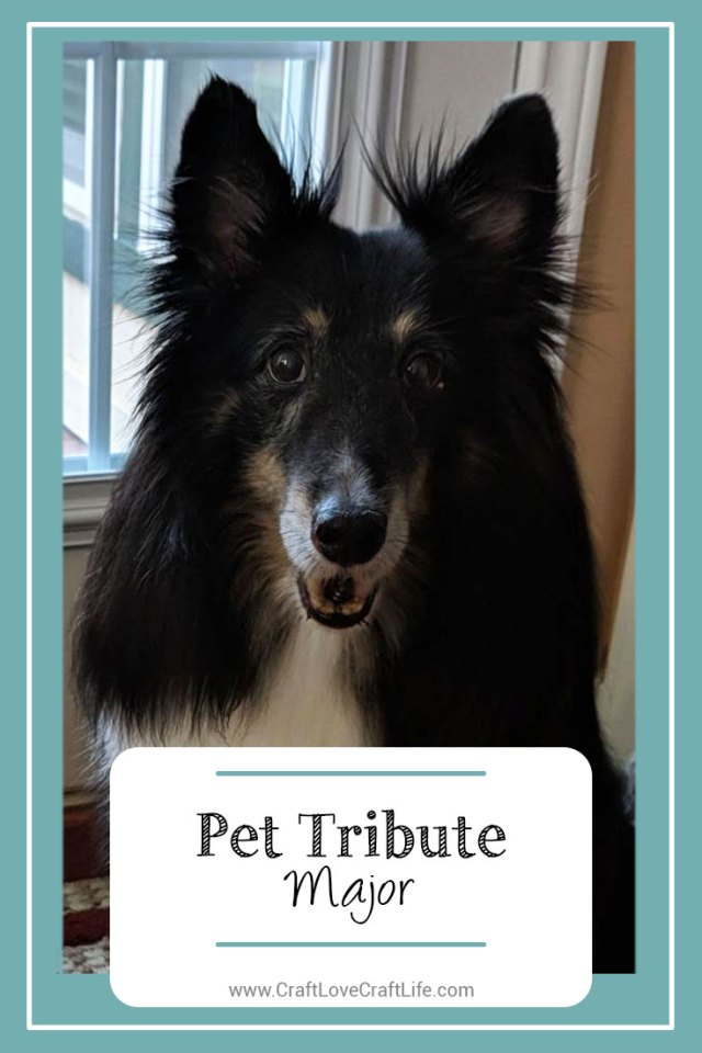 sheltie dog loss