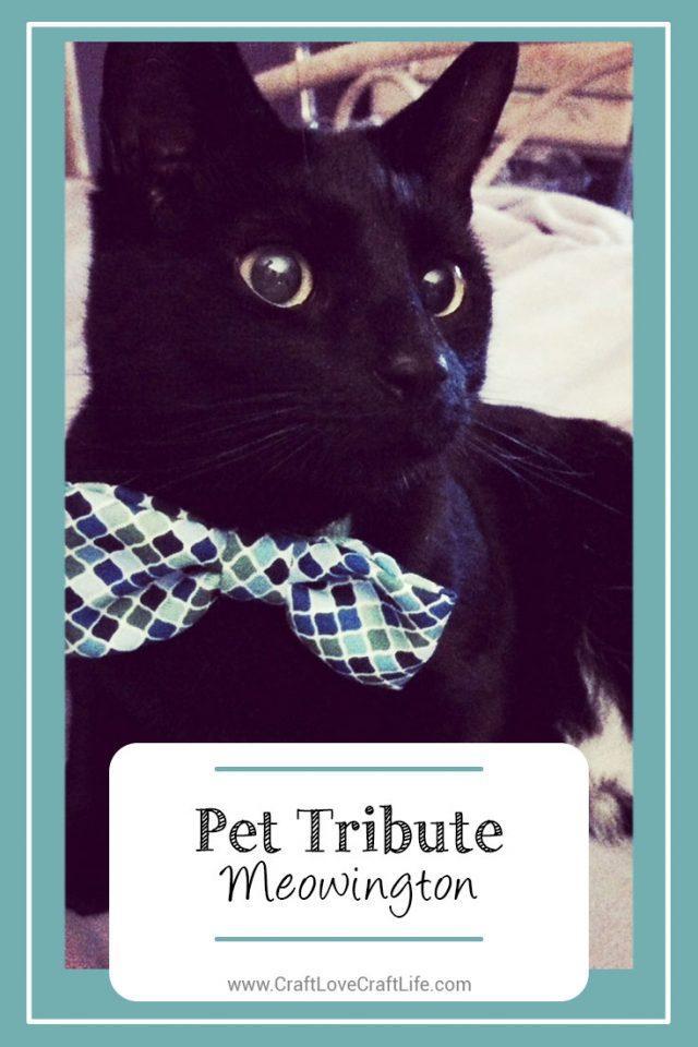 liver disease cat loss