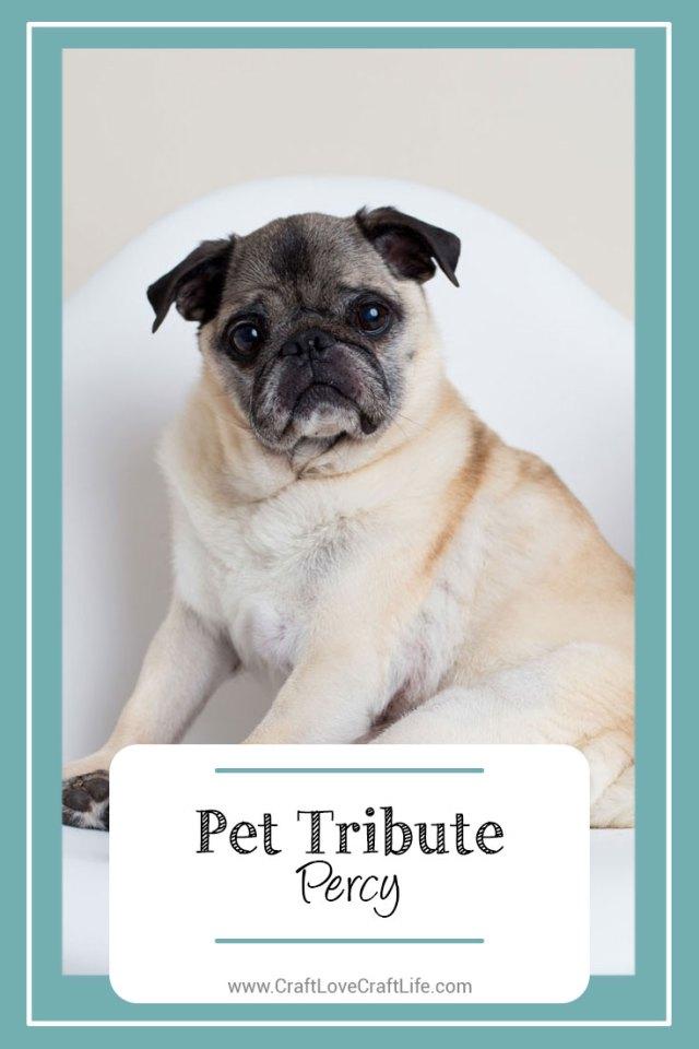 senior pug loss