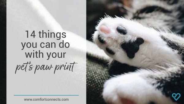 14 Things you can do with your pet's paw print
