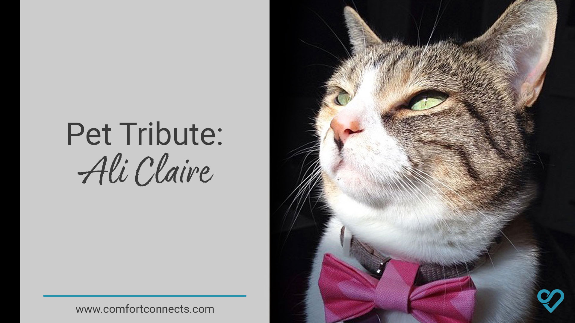 Pet Tribute: Ali Claire
