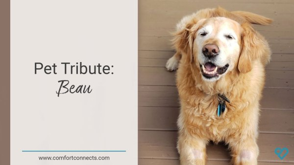 Pet Tribute: Beau