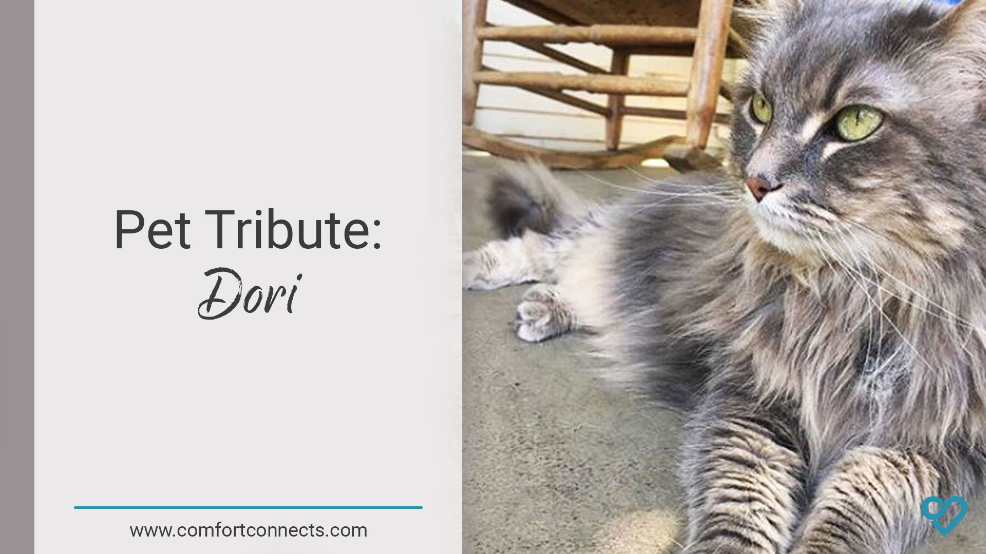 Pet Tribute: Dori