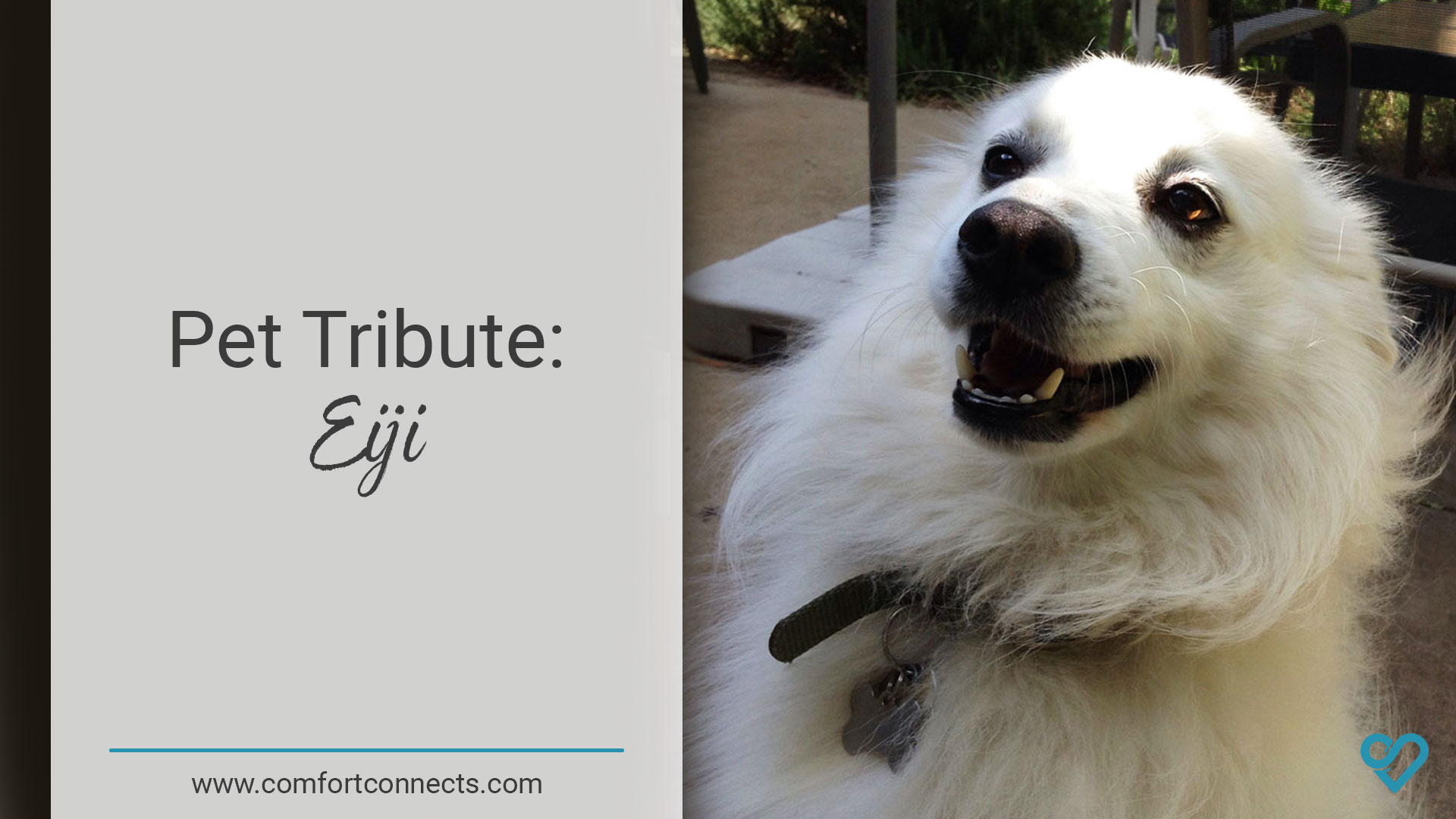 Pet Tribute: Eiji