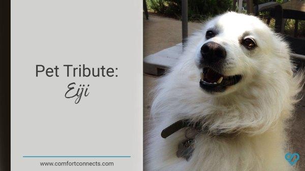 Pet Tribute: Eiji