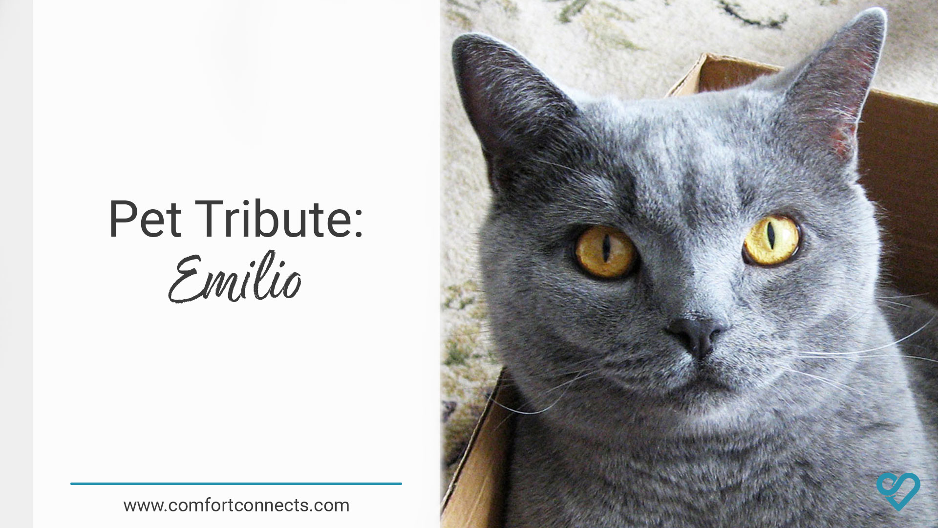Pet Tribute: Emilio