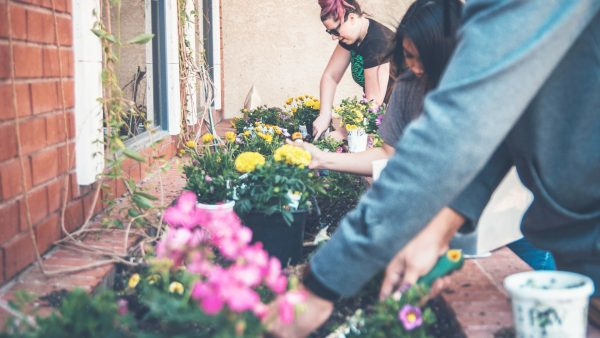 planting with ashes