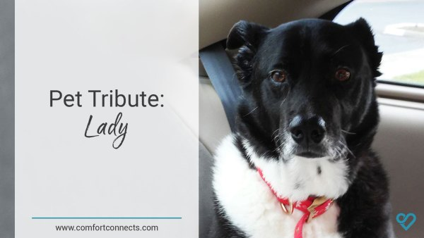 Pet Tribute: Lady
