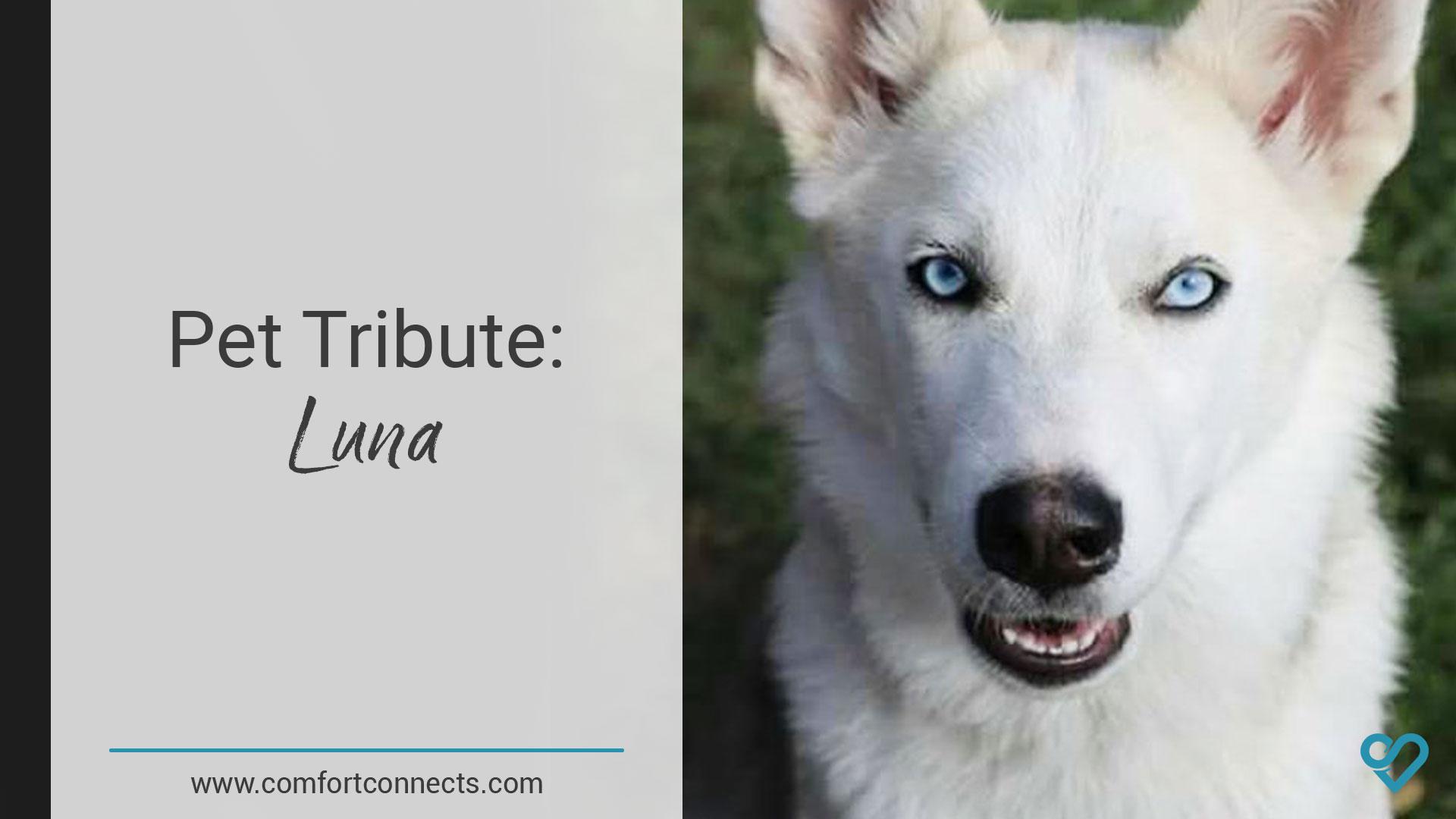 Pet Tribute: Luna