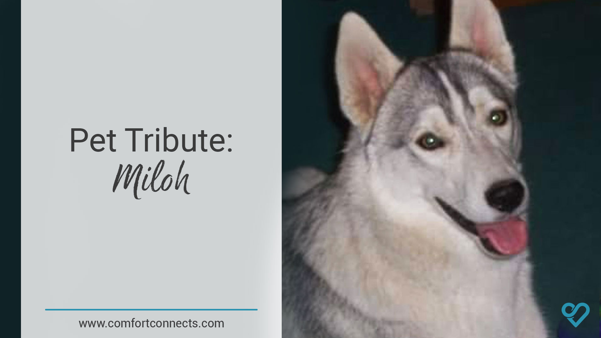 Pet Tribute: Miloh