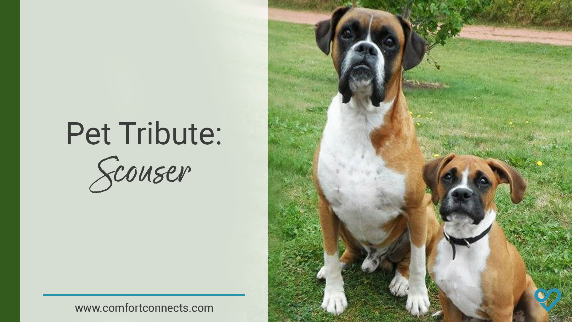Pet Tribute: Scouser