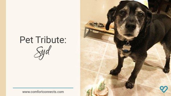 Pet Tribute: Syd