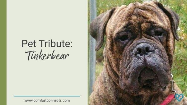 Pet Tribute: Tinkerbear