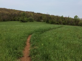 Beginning of Little Calf trail
