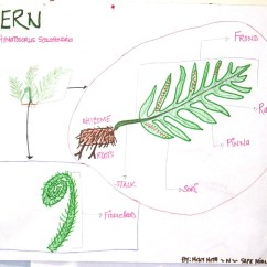Vascular Plant Diagram Ba Falcon Stereo Wiring Leaves Shape And Teaching On Pinterest