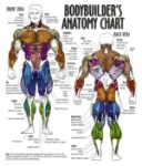 Anatomy Of The Human