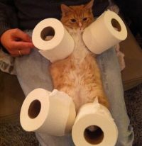 Cat with toilet paper on its legs