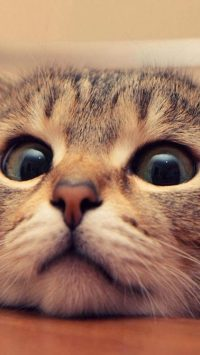 freaked out kitty eyes