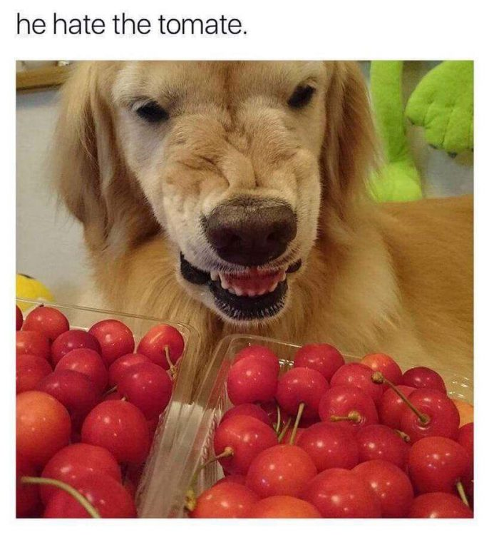 he hate tomate