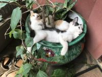 planted cats