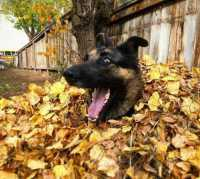 happy leaf dog