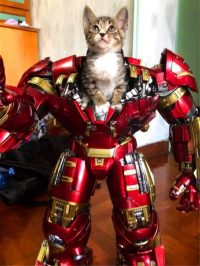 iron man kitten