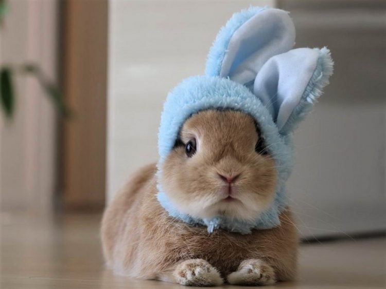 Bunny Disguise