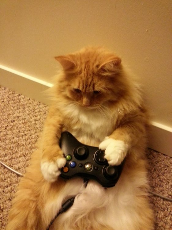 furry gaming cat