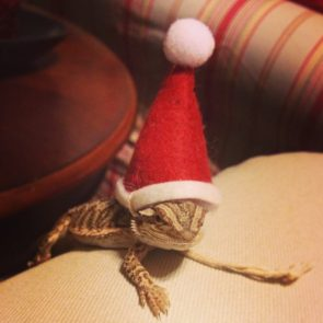 holiday lizard