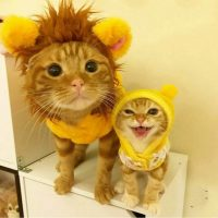 two dressed up lions