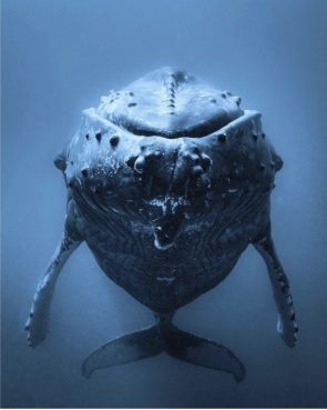 Whale in Blue